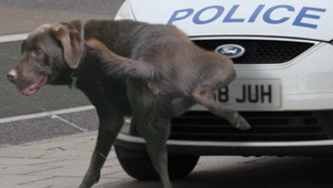 police-canine-critic