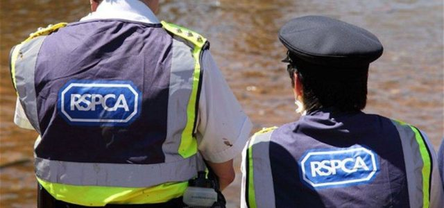 Protecting Yourself from the RSPCA – Your Rights When the Animal Police Come Calling